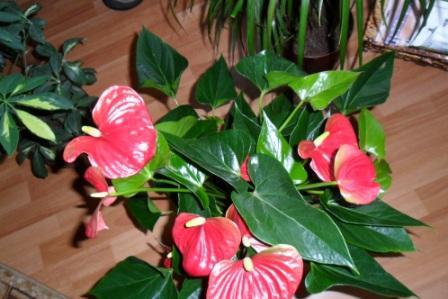 Влияние цветов на энергетику в доме