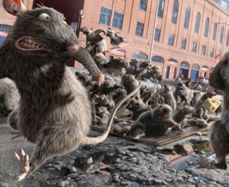 Профилактика от крыс и мышей
